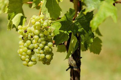 ワイン、発酵食品