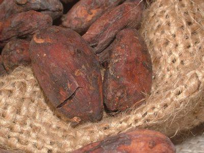 カカオ豆、発酵、乾燥
