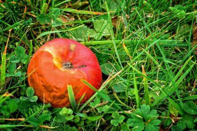 発酵と腐敗の違い、腐ったリンゴ